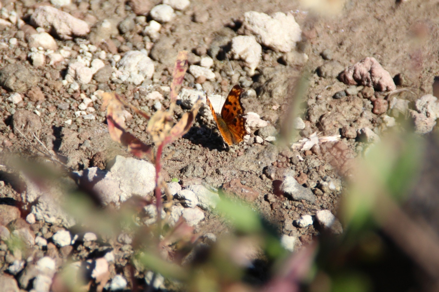cypress-tiny-butterfly-alice-lake